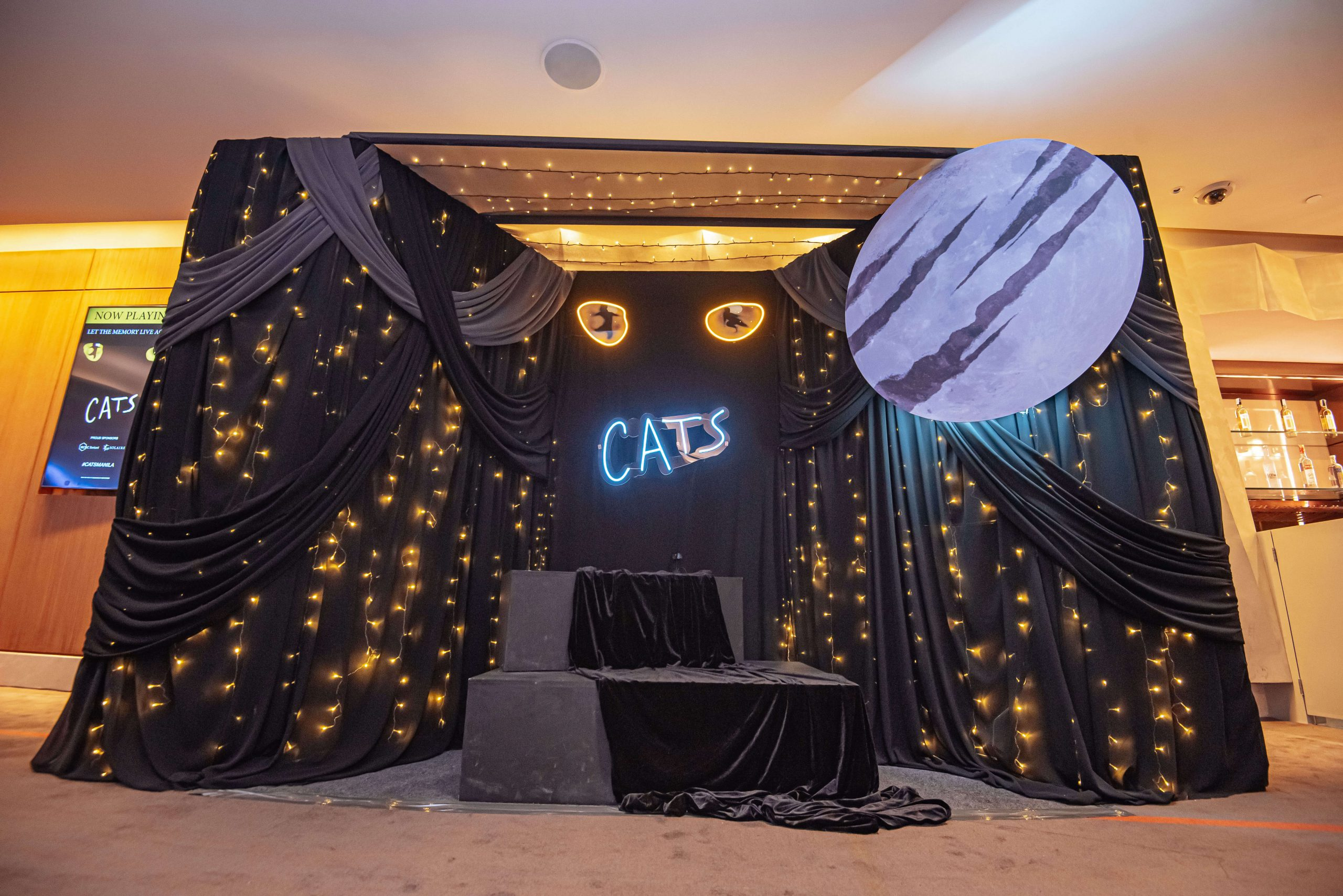 CATS_Gallery_14
